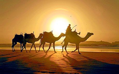 morocco-camels_1742251c
